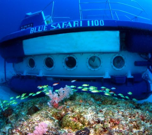 Blue Safari Submarine