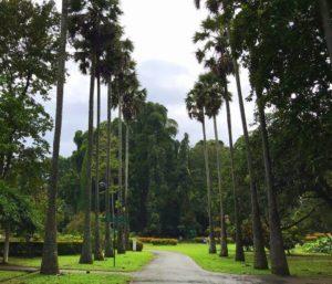 kandy botanical garden