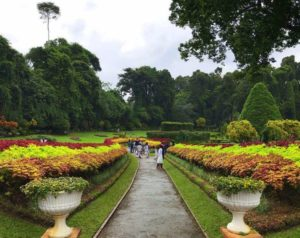 kandy royal botanical garden